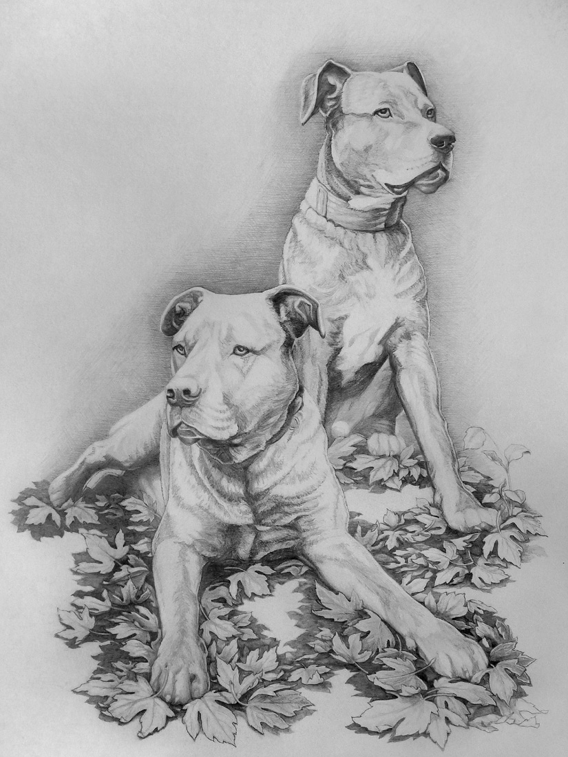 SKETCHES Amp PENCIL DRAWINGS LANDSCAPES SKETCHES PORTRAITS WILDLIFE