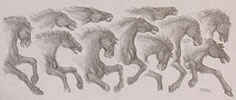 Pencil Sketch for Mural Horse Concept drawing for a mural on a bar at Diavlo's restaurant pencil drawing  by contemporary Canadian Artist INDIGO aka Kim Hunter