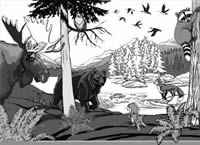 Wildlife Design for Wall Mural Childrens Landscape & Wildlife Mural Illustration and design by Vancouver Artist Kim Hunter / Indigo