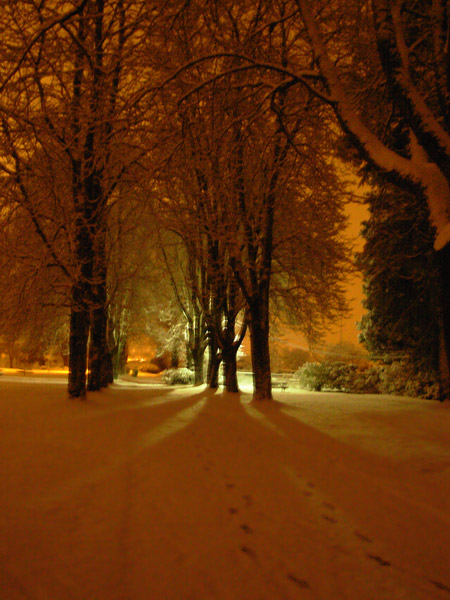 winter_night_photo.jpg