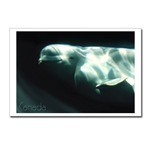 Beluga Whale Canada Art Cards, Canada Whale Souvenir Greeting Cards, White Whale Canada Postcards, Souvenirs & GIfts