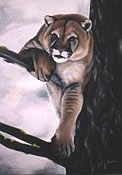 Cougar painting wildlife  painting mountain lion Draped over Tree Oil Painting wildlife painting Canadian Artist Kim Hunter / Indigo Commissioned paintings welcome!