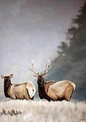Elk painting in Misty Mountains, wildlife painting Canadian Artist Kim Hunter / Indigo Commissioned paintings welcome!
