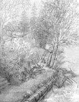 Landscape sketch Vancouver Stanley Park rain pencil sketches by Canadian Artist / Designer Kim Hunter / INDIGO