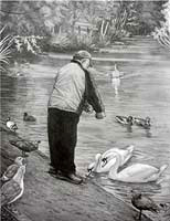 Feeding Birds & Swans in the park Pencil Sketches / Drawings / Illustration ? Ink Drawings & Original Art by Vancouver BC Artist Kim Hunter a.k.a.INDIGO CREATIVE ENDEAVOURS