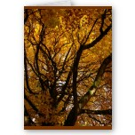 Autumn Maple Tree Blank Greeting Cards