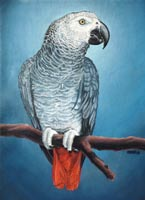 Pet Portrait from Photos Molly African Grey Parrot Painting oil on canvas Custom painted portrait by artist / designer Kim Hunter