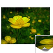 Buttercup Flower Gifts Classic Buttercup Cards Yellow Wildflowers Prints Cards and Yellow Buttercup Gifts and Deoc for Home Office Men & Women Buttercup Flower Gifts