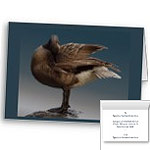 Canada Geese Cards Personalized or Blank Cards Goose Greeting Cards Personalized