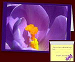 Easter Flowers Cards Personalized Crocus Cards