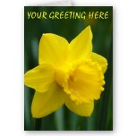 Daffodil Cards Personalized Easter Flowers Cards Classic Easter Flowers Cards