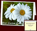 Daisy Cards Personalized Flower Cards