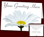 Daisy Cards Personalized Spring Flower Cards