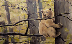 wildlife painting Kermode bear in a tree Oil painting on canvas click on Image for detail