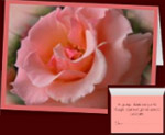 Peach Rose Cards Custom Personalized Greeting Cards