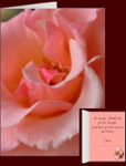 Peach Wild Rose Cards Personalized Wildflower Cards Peach Rose Cards