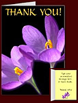 Crocus Flowers Cards Personalized Crocus Cards