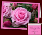 Pink Rose Cards Personalized Rose Greeting Cards