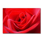 Red Rose Gifts Shop Roses Greeting Cards Romantic red rose art prints, Romantic Love Gifts, Lapel Rose T-shirts, rose cards, sweaters, rose mouspads, boxes, rose thong panties coasters, mugs, keepsakes, pillows, magnets & more!