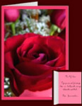 Formal Red Rose Cards Personalized Red Rose Greeting Cards