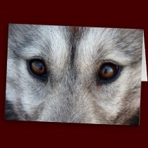 Customized Wolf Pup Greeting Cards Wildlife Card