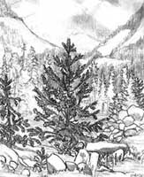 thumbnails/pencil Sketch Mountain View from the Lilloette River bank pencil drawing by contemporary Canadian Winding dirt road on Mayne Island BC by contemporary Canadian Artist INDIGO aka Kim Hunter pencil drawing  by Canadian Vancouver BC Artist INDIGO aka Kim Hunter Pencil Sketches / Drawings / Illustration Flowers Wildlife Landscapes Sketches Ink Drawings & Original Art & illustration landscape sketches, wildlife, nudes, people, portraits, pets, Art & Design Pencil, graphite & ink sketches & drawings by Kim Hunter freelance professional artist
