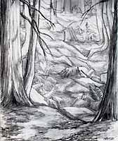 Landscape Pencil sketch done while on Mayne Island pencil drawing  by contemporary Canadian Artist INDIGO aka Kim Hunter