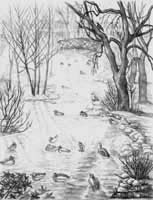 Pencil Sketch Stanley Park Landscape Sketch drawing. View from the cement bridge over Lost Lagoon's Creek in Stanley park pencil drawing  by Canadian Vancouver BC Artist INDIGO aka Kim Hunter Pencil Sketches / Drawings / Illustration Flowers Wildlife Landscapes Sketches Ink Drawings & Original Art & illustration landscape sketches, wildlife, nudes, people, portraits, pets, Art & Design Pencil, graphite & ink sketches & drawings by Kim Hunter freelance professional artist