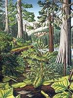 Wildlife Paintings w. landscape painting Stoltman Old Growth Slated for Logging Painting British Columbia Painting   by artist INDIGO / Kim Hunter landscape painting Canadian Artist Kim Hunter / Indigo Commissioned paintings welcome!