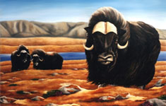 landscape wildlife painting Muskox on the tundra Oil on canvas painting click on Image for detail